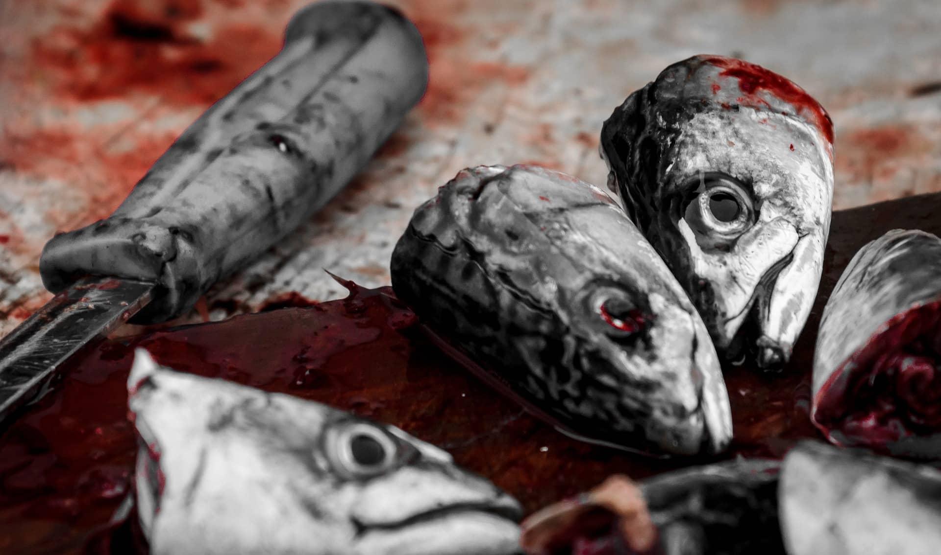 Raspa y cabeza pescado
