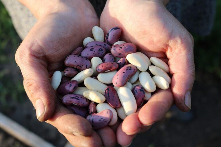 Para que las legumbres salgan más tiernas