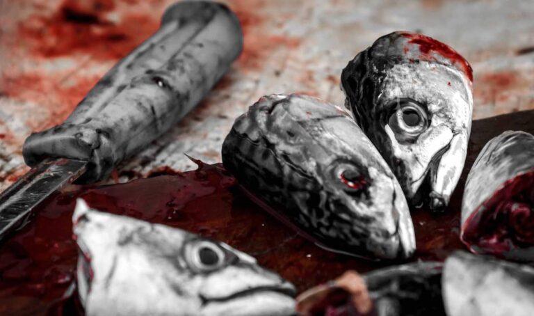 Que podemos hacer con las raspas y cabezas del pescado